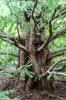 Favorite tree