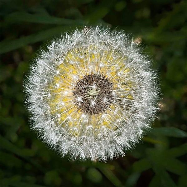 ISO 100 flower