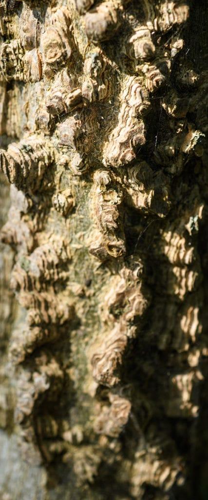 Tree Bark ISO 200