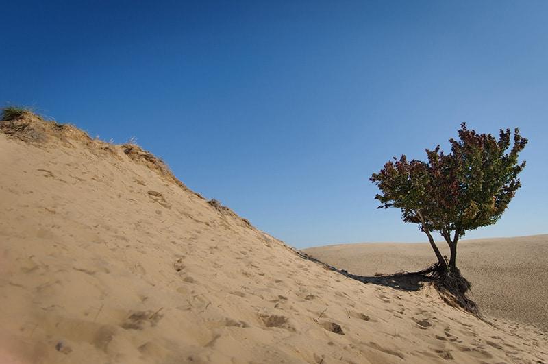 ISO 100 Landscape photo