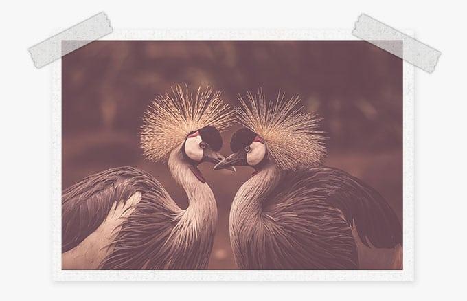 birds preset