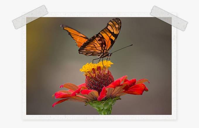 free Spring Lightroom presets