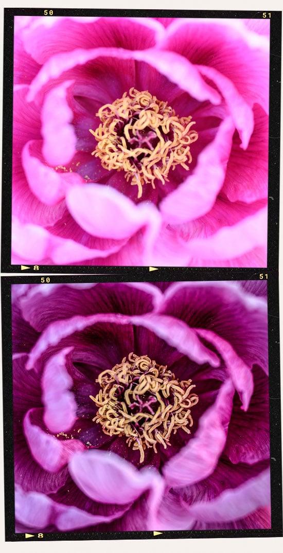 flower edit