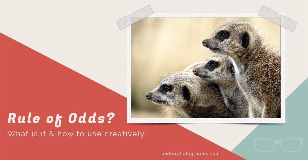 What is the rule of odds in photography?