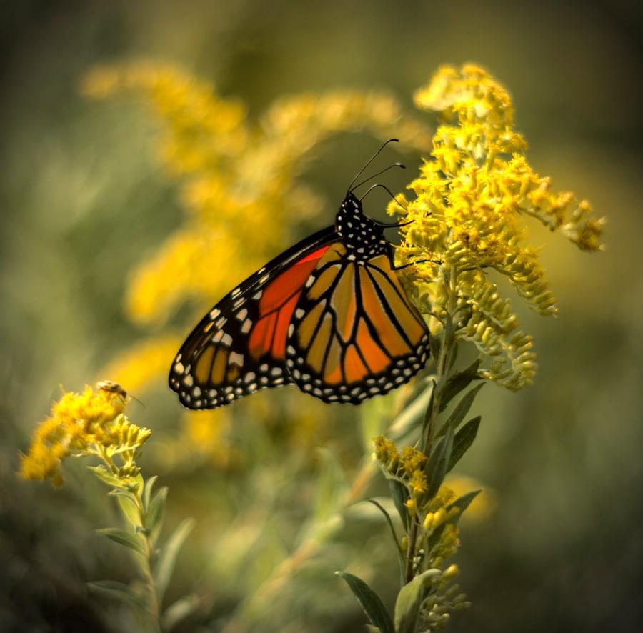 04butterfly