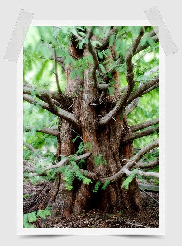 Tree, perfect exposure